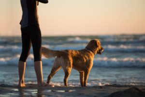 Dog-friendly beach holidays in Bude, Cornwall